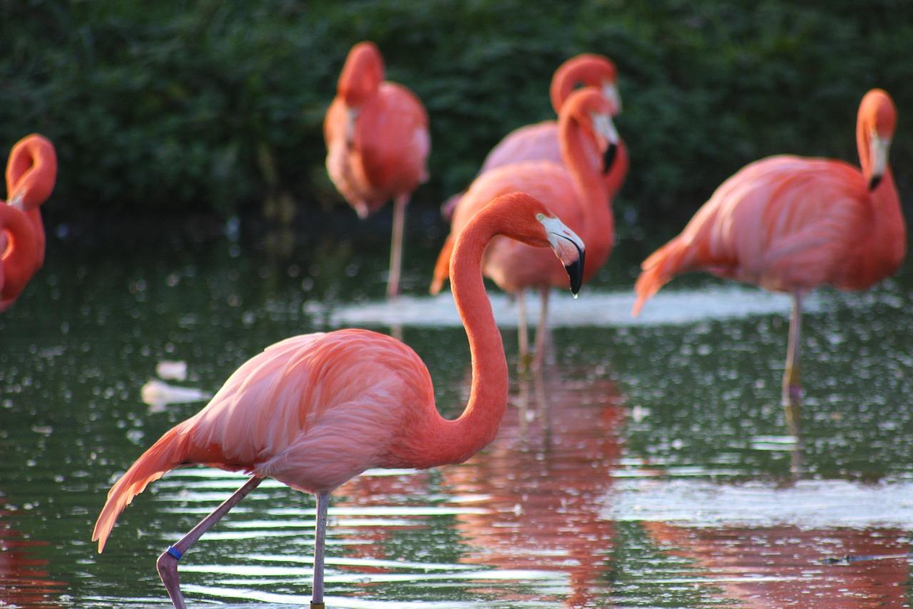 flamingo orlando